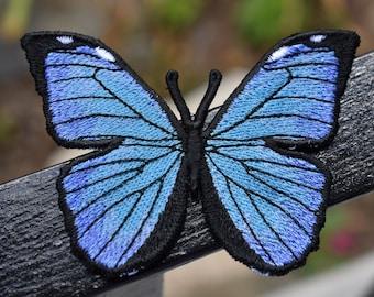 Giant Blue Morpho Butterfly