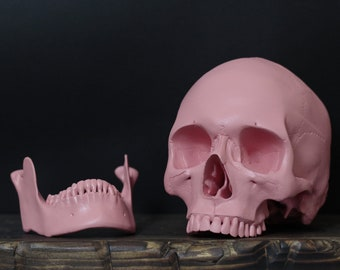 Blossom - Candy Pink Full Scale Life Size Realistic Faux Human Skull Replica with Removable Jaw / Art / Ornaments / Home Decor