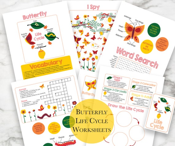 Butterfly Life Cycle Activity, Educational Tool, Elementary Worksheets, Homeschool, Printable Worksheets, Instant Download