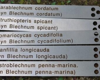 Blechnum Crib Label / Tag