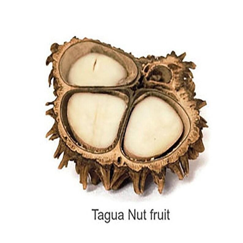 Bio-degradabl Peruvian Handmade Set. Eco-friendly Organic Aquamarine Tagua Nut Statement Necklace and Earrings Set New