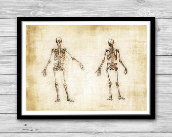 Medical Wall Art Anatomy Poster Human Skeletons print,Human Anatomy Print, Doctor Gift idea Medical Rustic decor Cotton Canvas Print