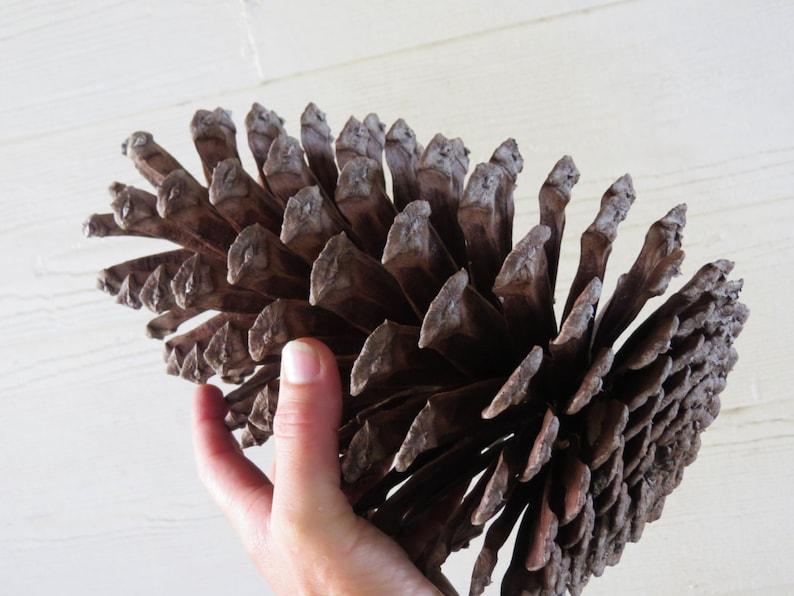 8-9 Jumbo Pine Cone Large Pine Cone Jumbo Pinecone image 0