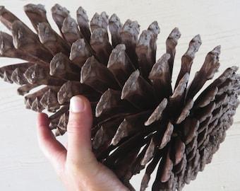 """8-9"""" Jumbo Pine Cone, Large Pine Cone, Jumbo Pinecone, Large Pinecone, Huge Pine Cone, Huge Pinecone, Pine Cone Craft, Pinecone Decoration"""