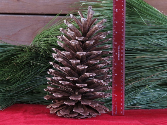 image 0 - Decorating Large Pine Cones For Christmas