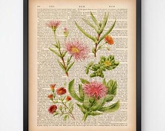 Succulent art print, Dictionary art, Instant download succulent print, Succulent wall art, Botanical wall decor, Vintage 8x10, 11x14 print