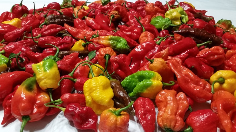 Fresh Super Hot Peppers - Mixed Box: Carolina Reapers, Ghost, Scorpion,  Chocolate Ghost, 7 Pod - Insanely Hot - Whole Fresh Pepper Pods