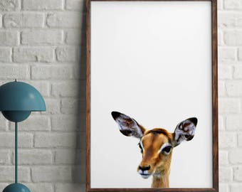 Antelope print, Antelope wall art poster, African printable wall art, Peekaboo Animals, Antelope color print, Africa room decor