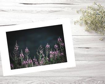 30X40, Nature photography, Flower, Decoration