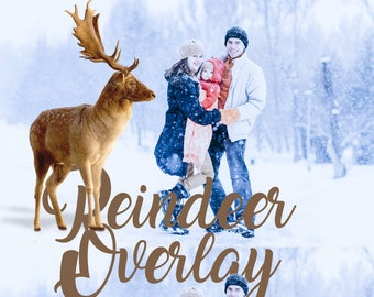 Reindeer Overlays Deer overlay Transparent PNG for Christmas Photoshop Clipart Mini Photo Session Instant download