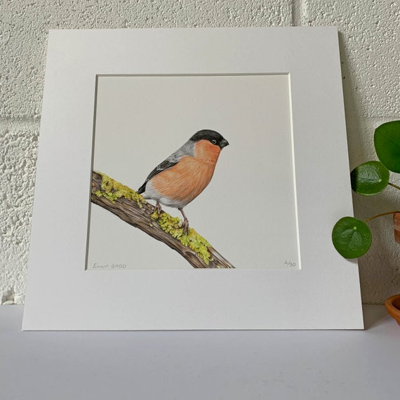 Bullfinch Limited Edition Giclee Print, Colour Pencil Drawing, Artist, Wildlife art, Bird