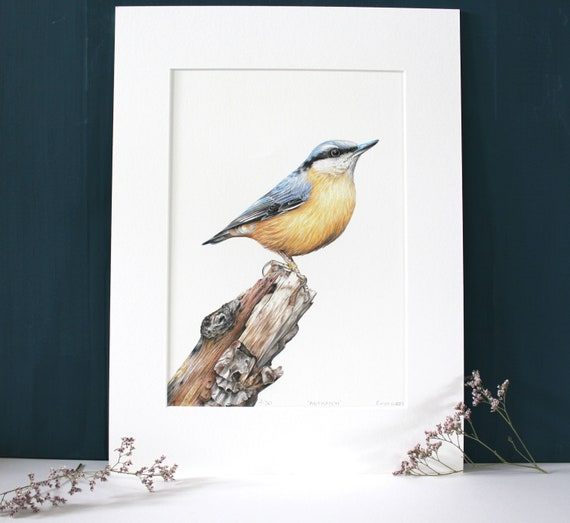 A4 Nuthatch Limited Edition Giclee Print, Colour Pencil Drawing, Artist, Wildlife art, Bird