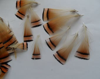 pheasant feathers gold, set of 4 beautiful quality