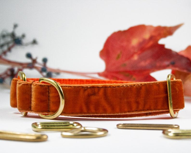 1 inch Old Gold Velvet Adjustable All Breeds Velvet Dog Collar Greyhound Sighthounds