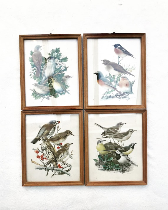 Vintage bird wall art Barruel Illustrations Les oiseaux de France collection 1950s lithographies ready to hang set of 4 bird lover boho gift