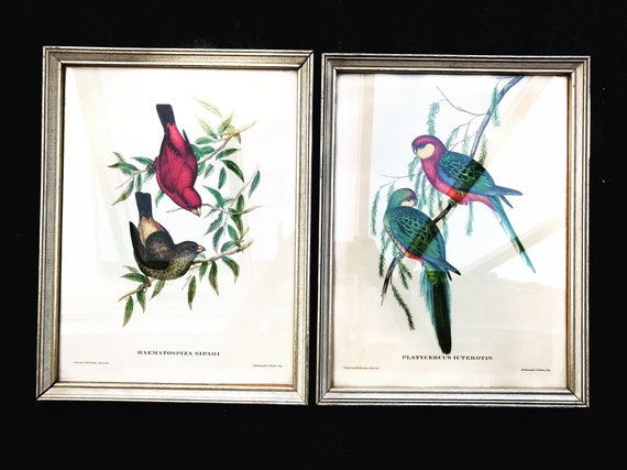 Vintage Pair Framed Bird Parrot Prints Illustrations Tropical Wall Decor Art Print, Bird Prints, Beach Cottage Decor Ready to hang 1960s