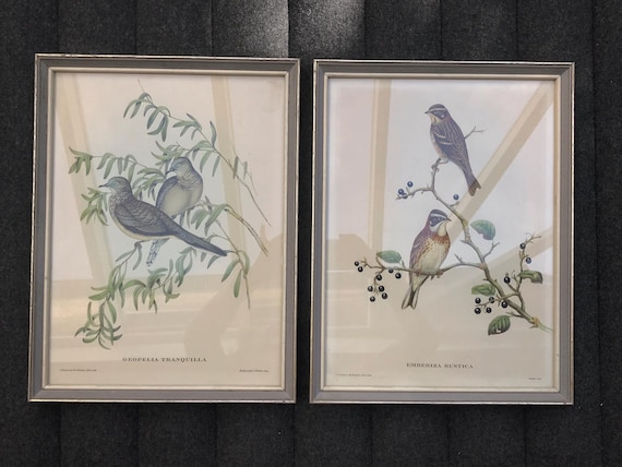 Vintage Pair Framed Bird  Plants Prints Illustrations Tropical Wall Decor Art Print, Bird Prints, Beach Cottage Decor Ready to hang 1960s