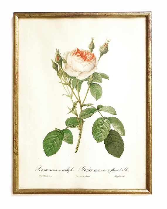 Framed Roses Print Vintage J. L. Prevost French Botanical Floral Lithograph Art Wall Cottage Shabby Chic Romantic gift Victorian decor