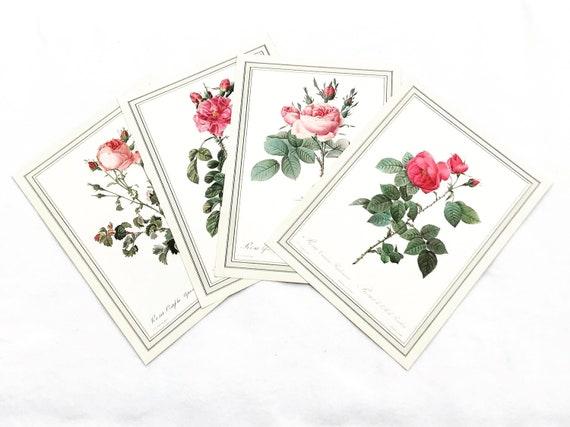 Botanical print wall art Roses Set Original 1960s Vintage  Rose Antique rose prints set  Victorian art wall Cottage Chic green and pink