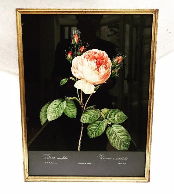 Roses Framed Print 1960s Vintage flower Print  Botanical  Roses Wall Art Boho chic decor  Antique rose cottage chic entry