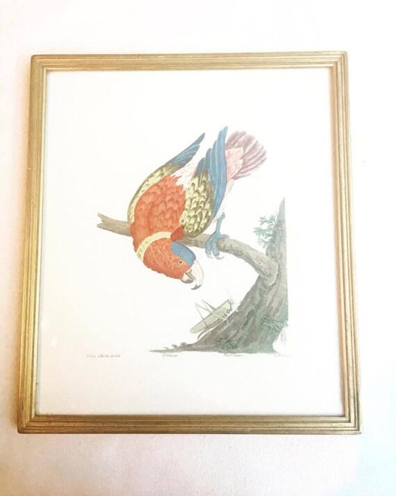 Vintage Framed  Parrot Print, Tropical Decor  Bird  Art Print, Bird Prints, Beach Cottage Decor, Print Wall Art, Belgium 1960s, parrot art