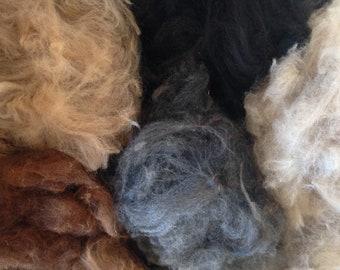 Alpaca Fibre, Mixed colours fleece, raw alpaca fleece, Raw Fleece Australia