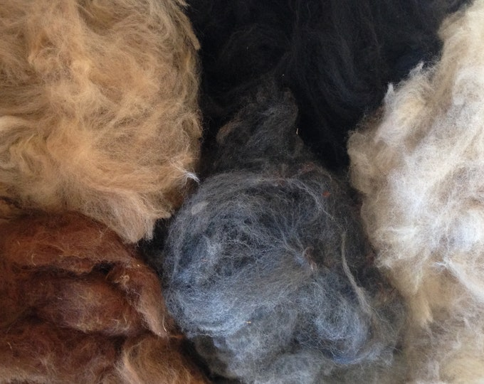 Featured listing image: Alpaca Fibre, Mixed colours fleece, raw alpaca fleece, Raw Fleece Australia
