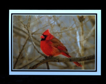 A Cardinal Sitting On A Branch 5x7 Blank Card By Thomas Minutolo