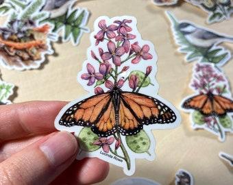 Vinyl Sticker - Monarch butterfly on Honesty watercolor