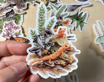 Vinyl Sticker - Red Efts with Trumpet Chanterelles watercolor