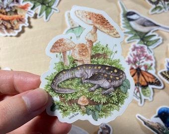 Vinyl Sticker - Spotted Salamander with Blusher Mushrooms watercolor
