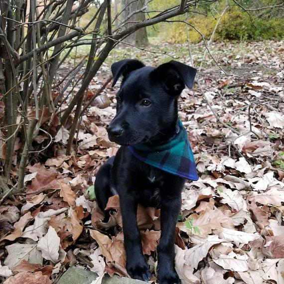 Vert / / bleu à carreaux - flanelle chien Bandana