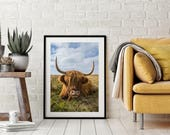 Highland cow, photo print...