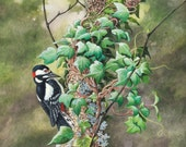 Woodpecker on Ivy // Archival Giclee Print // Watercolour Wildlife Art // Sean Milne Prints