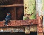 Swallow on Rusty Hinge //...