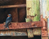Swallow on Rusty Hinge // Archival Giclee Print // Watercolour Wildlife Art // Sean Milne Prints