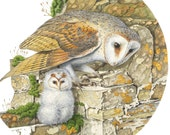 "Barn Owl & Owlet // Square 13.5"" x 13.5"" Archival Giclee Print // Watercolour Wildlife Art // Sean Milne Prints"