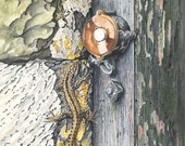 Lizard on Lightswitch // ...