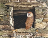 Barn Owl in Stone Window // Archival Giclee Print // Watercolour Wildlife Art // Sean Milne Prints