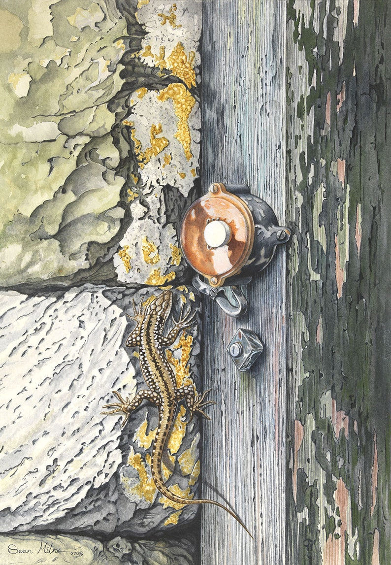 Lizard on Lightswitch // A4 8 x 11.5 Archival image 0
