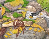 Pied Wagtail and Ladybird // Archival Giclee Print // Watercolour Wildlife Art // Sean Milne Prints