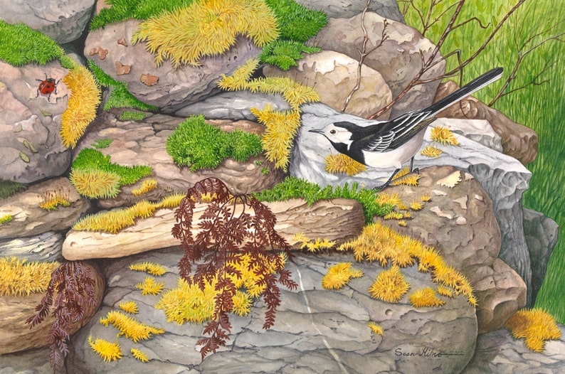 Pied Wagtail and Ladybird // Archival Giclee Print // image 0