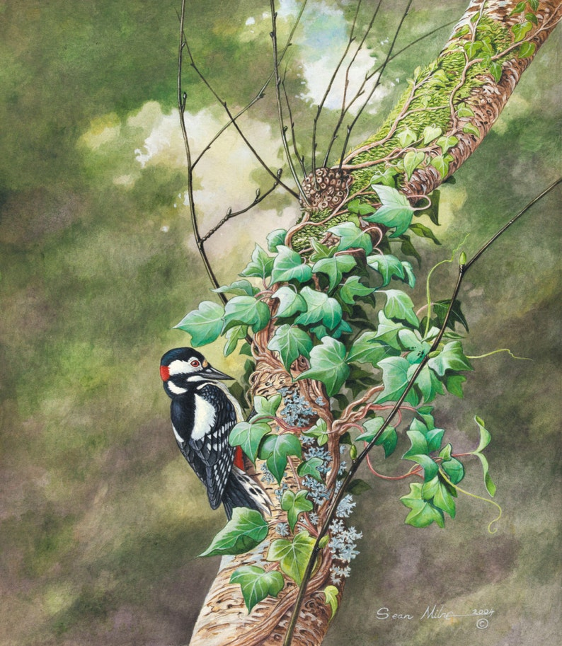Woodpecker on Ivy // Archival Giclee Print // Watercolour image 0