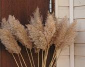 Large light colored dry reeds plumes, long cane plume pampas grass beach theme style flower arrangement tall vase bouquet centerpiece