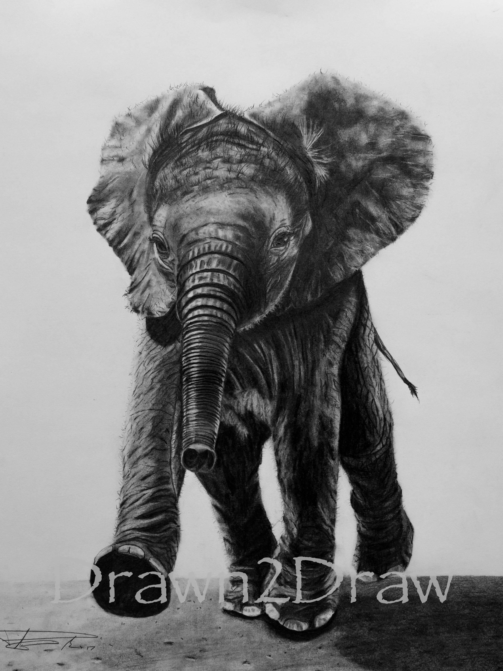 Baby Elefant Zeichnung Druck Geburtstag Weihnachtsgeschenk