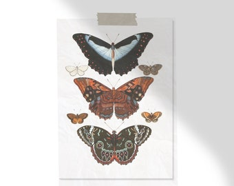 Bohemian Butterfly Print, Boho Wall Decor, Boho Decor, Colorful Print, Insect Print, Antique Butterfly Art
