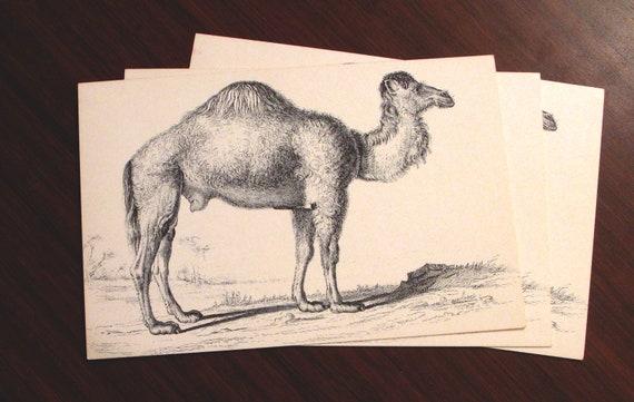 Arte Di Dromedario Cammello Cartolina Illustrazione Morto Etsy