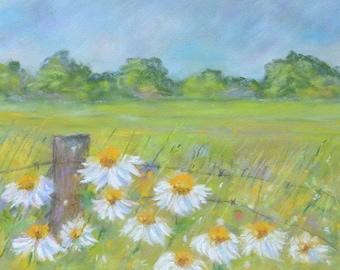 Field of Daises, Original Pastels, Meadow, Landscape