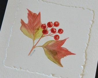 Original Watercolour, Greeting Card, Hawthorn Berries, Botanical, Note Card