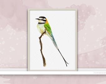 Bee-Eater {Birds of my heart} Watercolor Illustration & Painting Art Print